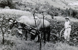This is my dad working on the family farm when he was a teenager.